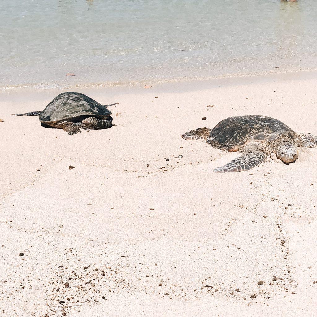 Turtles Poipu Beach